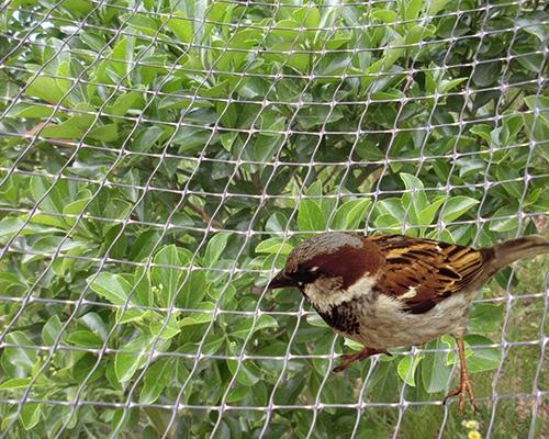 Упор птица сеток